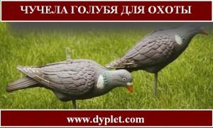 Чучела голубя для охоты