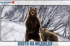 Охота на медведя-вызов для профессионалов