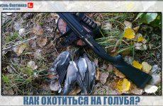 Как нужно охотиться на голубя?