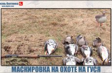 Секреты маскировки в поле во время охоты на гуся!
