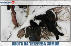 Зимние прелести охоты на тетерева!