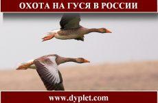 Охота на гуся в России