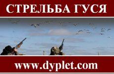 Стрельба гуся