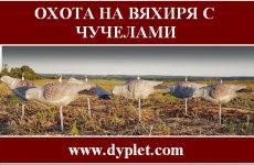 Охота на вяхиря с чучелами