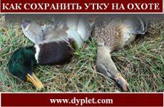 Как сохранить утку на охоте?