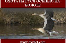 Охота на гуся осенью на болоте