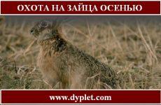 Охота на зайца осенью без собаки