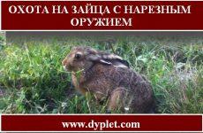 Охота на зайца с нарезным оружием