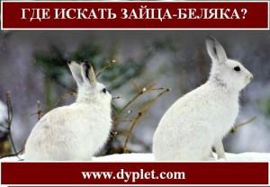 Где искать зайца-беляка