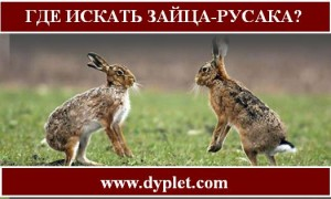 Где искать зайца-русака