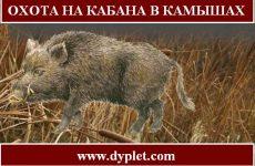 Охота на кабана в камышах