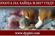 Охота на зайца 2017