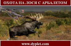 Охота на лося с арбалетом
