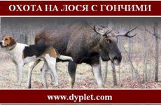 Охота на лося с гончими