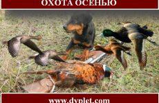 Охота осенью. Самые известные виды и способы
