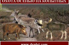 Охота осенью на копытных. Охотимся на кабана, косулю и лося