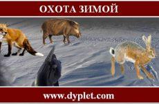 Охота зимой. Популярные способы охоты