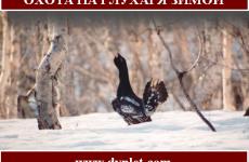 Охота на глухаря зимой. Основы и полезные советы