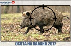 Охота на кабана 2017. Блестящая подборка видео с охоты