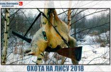 Охота на лису 2018. Обзор видео заслуживает внимания