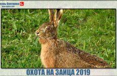Охота на зайца 2019. Видео самых интересных моментов