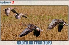 Великолепная охота на гуся 2019. Видео с мест событий