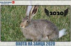 Разноплановая охота на зайца 2020. Новый сезон захватывающих видео